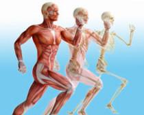 Sportmedizin, Höhenmedizin, Gesundenuntersuchung