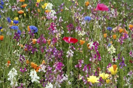 Kräuterwanderung, Heilpflanze, essbare Wildpflanzen
