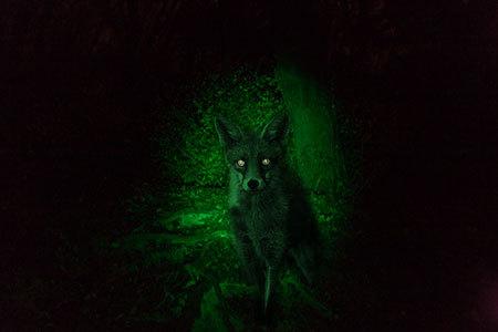Mit Single wandern, Nachteulentour ÖTK